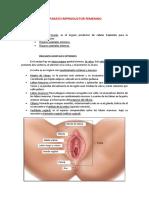 APARATO REPRODUCTOR FEMENINO-converted