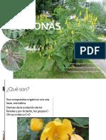 Quinonas-1