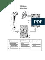 Histo Lab2 2F Monzon Aruu.pdf