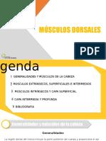 Músculos dorsales