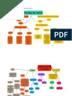 MAPA MENTAL  MORFOLOGIA Y CLASIFICACION DE LOS FRUTOS.docx