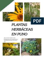 Especies Herbáceas PUNO
