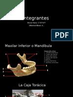 Sistema Esqueletico. yaney.pptx
