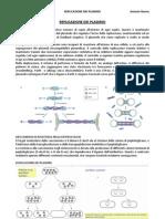 Miv Replicazione Dei Plasmidi