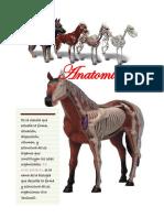 Cuaderno Anatomía Completo