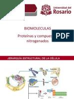 proteinas y  derivados nitrogenados.ppt