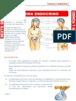 SISTEMA ENDOCRINO - C.A.