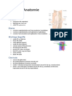 Stunden Anatomie 11