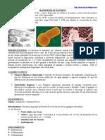 Haemophilus Ducreyi y Calimatobacterium Granulomatis