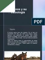 Equinos y su osteología.pptx
