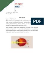 El ojo humano - Trabajo de Psicologia.