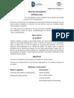 PRACTICA DE INJERTOS.docx