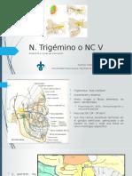 Nervio trigémino V