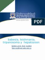 Babesia  leihmania  , tripanosona y hepatozoom