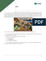 Animalia - cordados-apostila.pdf