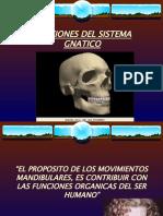 vdocuments.mx_funciones-del-sistema-gnatico.ppt