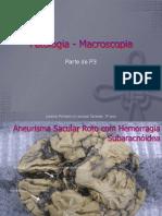 Patologia3 - Macroscopia