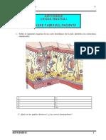 ACTIVIDADES . HIGIENE Y ASEO DEL ENFERMO.pdf