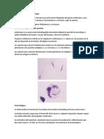 Resumen tema Leishmaniasis.docx