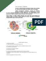 Diferencias entre células animales y vegetales.docx