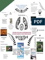 mapa mental 3.pdf