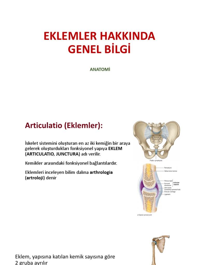 Eklemler Hakkinda Genel Bilgi Anatomi Bu eklemlerin büyük bir kısmı gelişme döneminde görülen erişkin. eklemler hakkinda genel bilgi anatomi