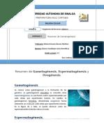 Resumen de Gametogenesis