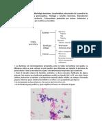TEMA 5 Bacterias microbiologia
