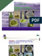 CSS451-Plant Tissue Culture (2010)