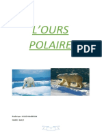 OURS_Polaire