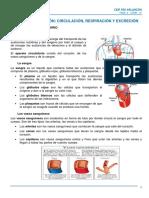 tema2_nutricion_CIRCULACION_RESPIRACION_EXCRECION.pdf