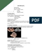 encefalul.pdf