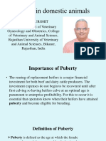 Puberty in Domestic Animals.