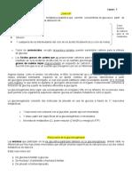 Info - Gluconeogénesis