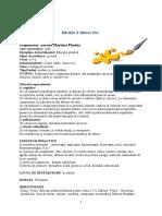 proiect_pictura_ II