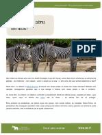 1ciclo-mamiferos-porque-e-que-as-zebras-tem-riscas