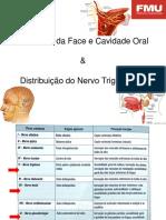 ESTOMATOGNÁTICO - Inervação Face e Cav Oral mais Distribuição do Trigêmio