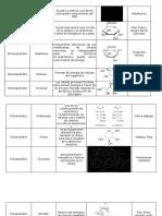 Monosacáridos nutricion.docx