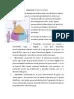 MATERIAL DE APOYO SEMANA 2