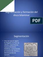 8.- Segmentación y formación el disco bilaminar