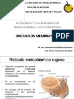 03.2 Organelos membranosos