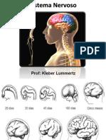 Sistema Nervoso_psicologia.ppt