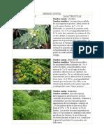 Herbario_Digital_SSP