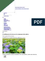 La influencia de la luz en el crecimiento del cultivo _ PRO-MIX