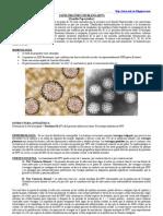 PAPILOMAVIRUS HUMANO (HPV)