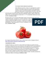 Cultivo de tomate chonto.docx