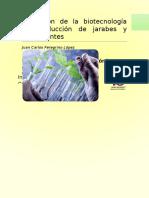 Aplicación de la biotecnología en producción de jarabes y edulcorantes