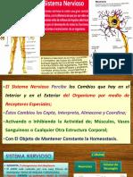 7-Sist-Nerv-Sentidos.pdf