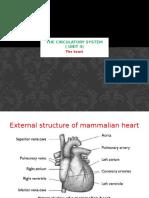 The circulatory system (3)
