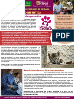 boletinmascotas octubre.pdf